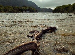 Muckross Deadwood with Lake